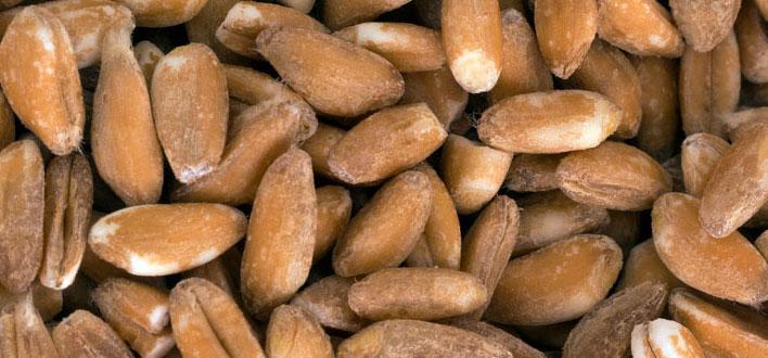 Dieta proteica, alleata per dimagrire